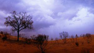 Desert Oak, Northern Territory, Australia. A Limited Edition Fine Art Landscape Photograph by Richard Hume