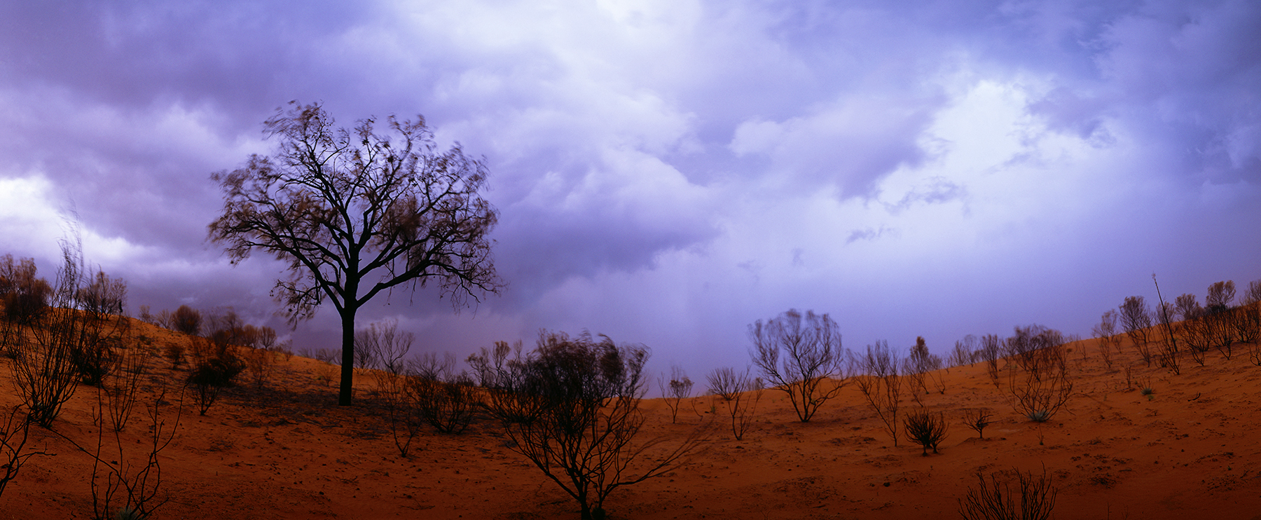 Desert Oak, Northern Territory, Australia. A Limited Edition Fine Art Landscape Photograph by Richard Hume