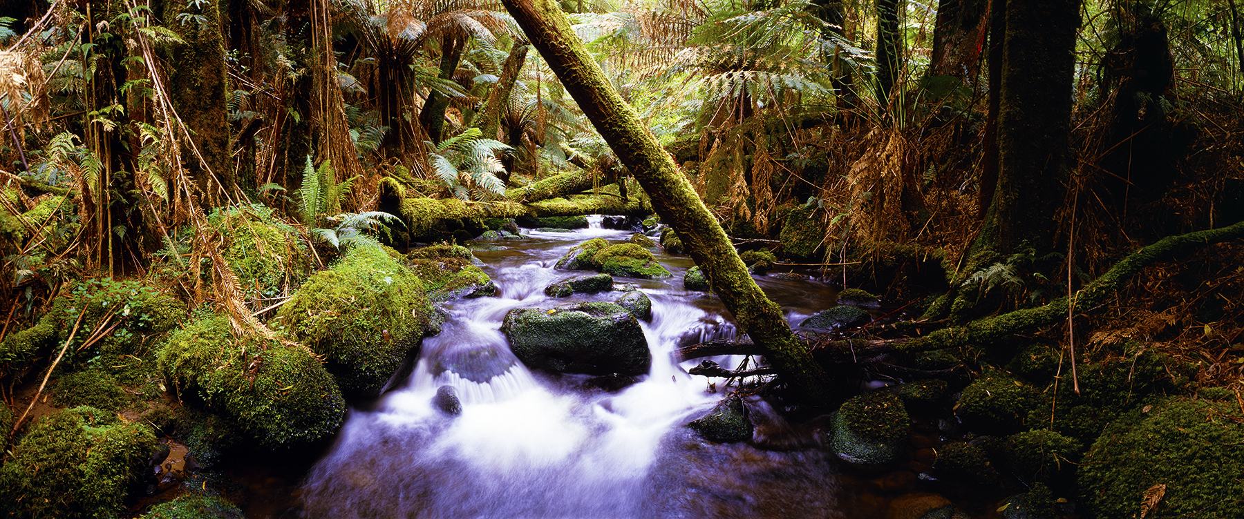 Forest Treasure, Victoria, Australia. A Limited Edition Fine Art Landscape Photograph by Richard Hume