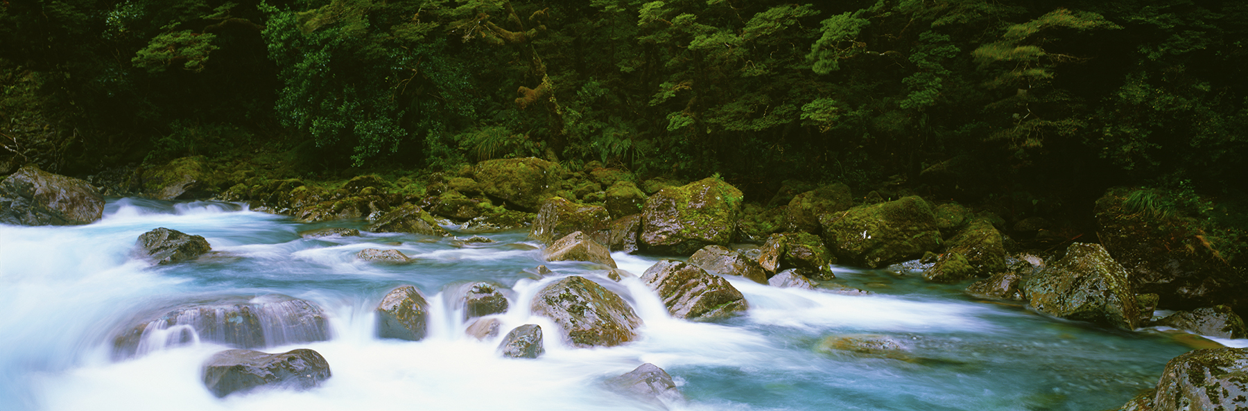 Hollyford Treasure, Fiordland, New Zealand. A Limited Edition Fine Art Landscape Photograph by Richard Hume