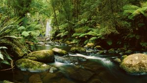 Hopetoun Falls, Victoria, Australia. A Limited Edition Fine Art Landscape Photograph by Richard Hume