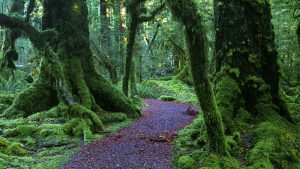 Serene Fiordland Forest, Fiordland, New Zealand. A Limited Edition Fine Art Landscape Photograph by Richard Hume