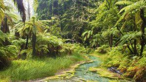 Divine, Rotorua, New Zealand. A Limited Edition Fine Art Landscape Photograph by Richard Hume