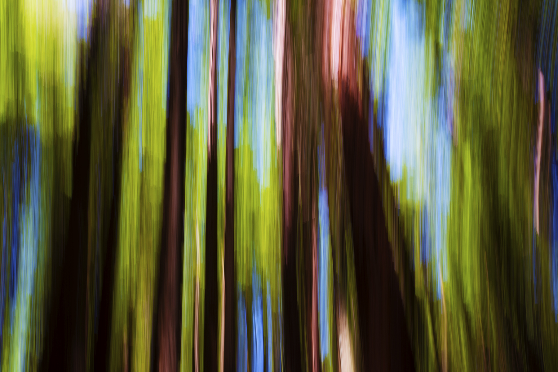 Redwood, Rotorua, New Zealand. A Limited Edition Fine Art Landscape Photograph by Richard Hume