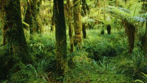Serene Forest, Karamea, New Zealand.A Limited Edition Fine Art Landscape Photograph by Richard Hume